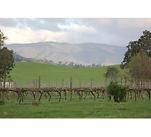 Vineyard in the Valley Photographic Print