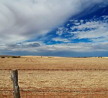 Rural fence line by John Harvey