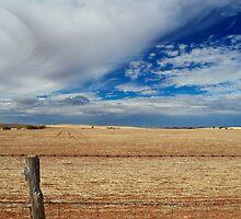 Rural fence line by John Harvey