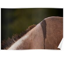 Equine Donkey Withers Poster