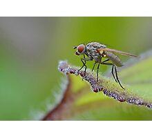 Macro Fly Photographic Print