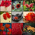 I See Mostly Red - Photo Collage  by Sandra Foster