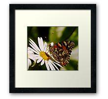 Meadow Argus Butterfly on a Marguerite Daisy Framed Print