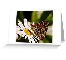 Meadow Argus Butterfly on a Marguerite Daisy Greeting Card
