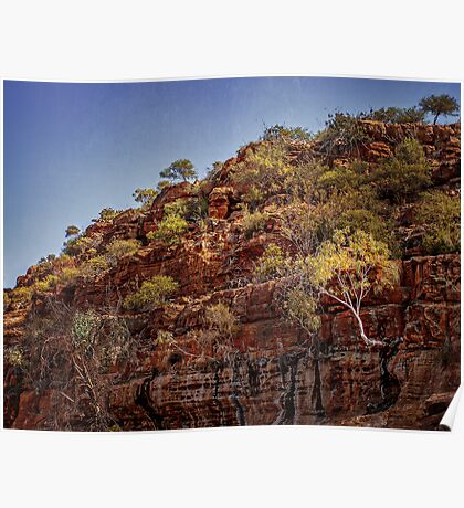 Murchison River Ghost Gum Poster