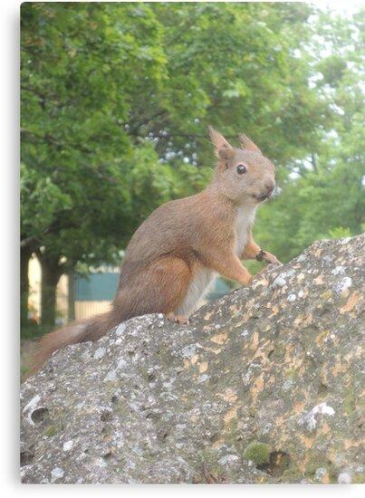 Hi There (Wild squirrel) by CreativeEm