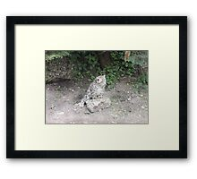 One day I'll be bigger than this rock... Framed Print