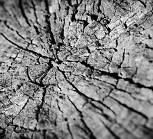 Old Texture Stump by The Photo  Nursery