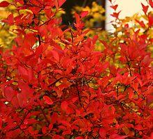 Autumn Fire by karina5