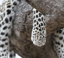 Leopard in a tree:a different view! by jozi1