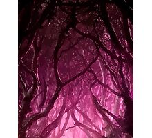 Tangled Trees Photographic Print