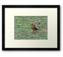 Robin Profile Framed Print