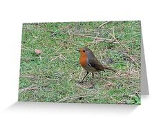 Robin Profile Greeting Card