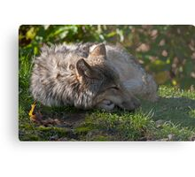 Taking A Nap Metal Print