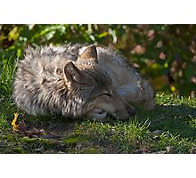 Taking A Nap Photographic Print