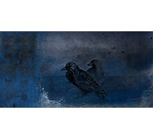 Two little crows blue sky dark night Photographic Print
