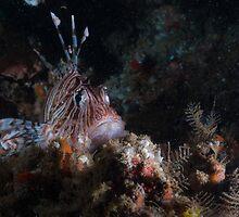 Lionfish Den by Kyra Kalageorgi
