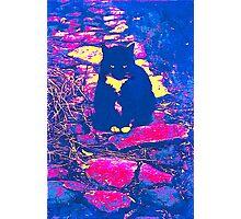 Color Cat Photographic Print
