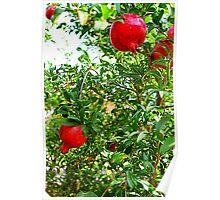 Pomegranate Tree Poster