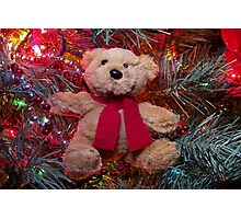 Christmas Teddy Bear Photographic Print