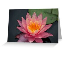 Very Pink Water Lily Greeting Card