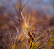 Color! Fall grasses at the Chicago Botanic Garden by BonnieJames