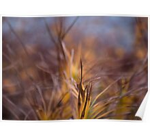 Color! Fall grasses at the Chicago Botanic Garden Poster