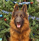 Hoss at Christmas by Sandy Keeton
