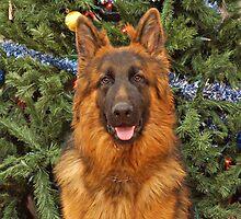 Gusto at Christmas by Sandy Keeton