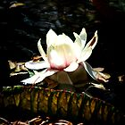 Waterlily Flower by tropicalsamuelv
