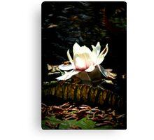 Waterlily Flower Canvas Print