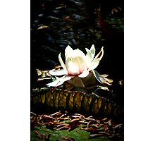 Waterlily Flower Photographic Print