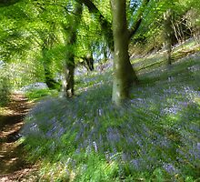 Whacky Bluebell Wood  by Heidi Stewart