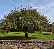 The Apple Tree by PineSinger