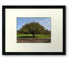 The Apple Tree Framed Print