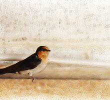Winter Swallow by Michelle Ricketts