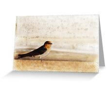 Winter Swallow Greeting Card