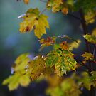 Autumn leaves  by Stephen J  Dowdell