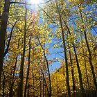 Aspen Gold by Jeri Stunkard