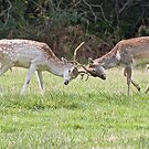 Fighting Fallow's by Alan Forder