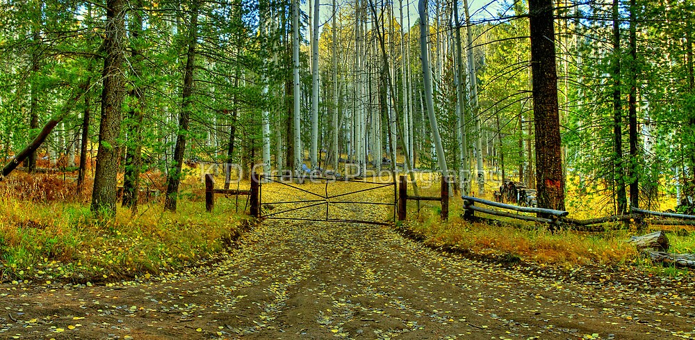 Gate To The Yellow Leaf Road by K D Graves Photography