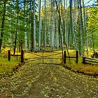 Gate To The Yellow Leaf Road by Diana Graves Photography