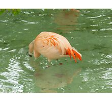 Tail Feathers Photographic Print