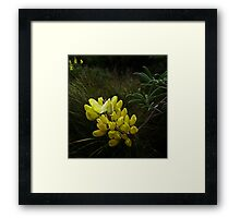Lup the Lup  Framed Print