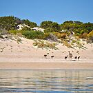 Family day on Longnose Peninsula, Coffin Bay by Ian Berry