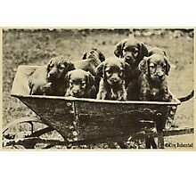 Happiness is a warm Puppy Photographic Print