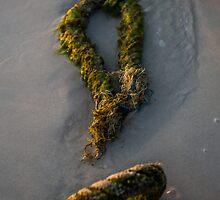 the rope on beach seen at sunset - 2 by vishwadeep  anshu