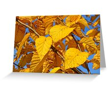 Autumn leaves in the wind #3 Greeting Card