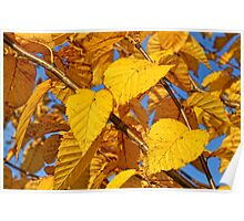 Autumn leaves in the wind #3 Poster