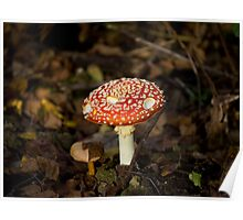 Fly Agaric Toadstool Poster